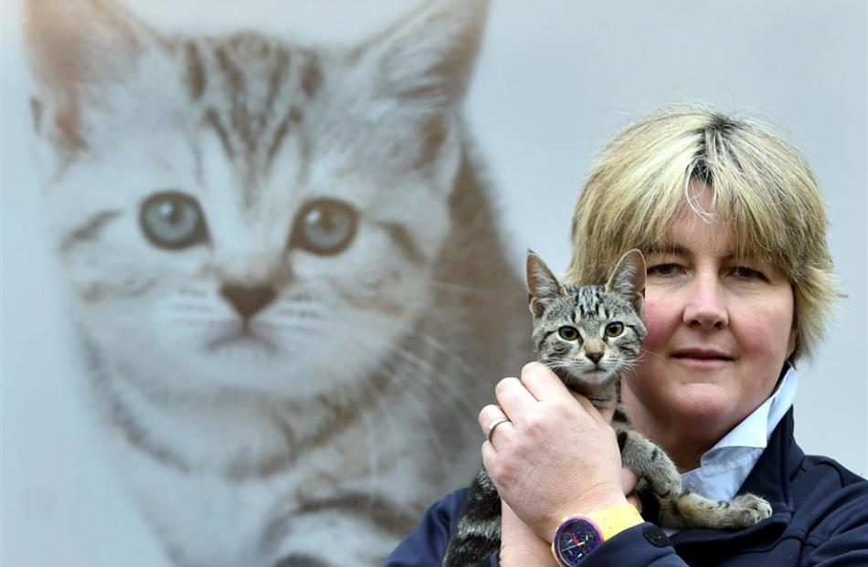 SPCA Otago executive officer Sophie McSkimming holds a cat, Sophia, available for adoption. Photo...
