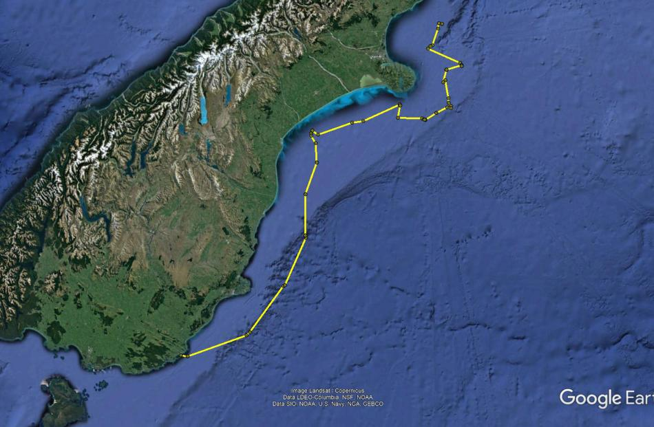 The map shows the trajectory of a yellow-eyed penguin with a transmitter on its back. Image: Supplied