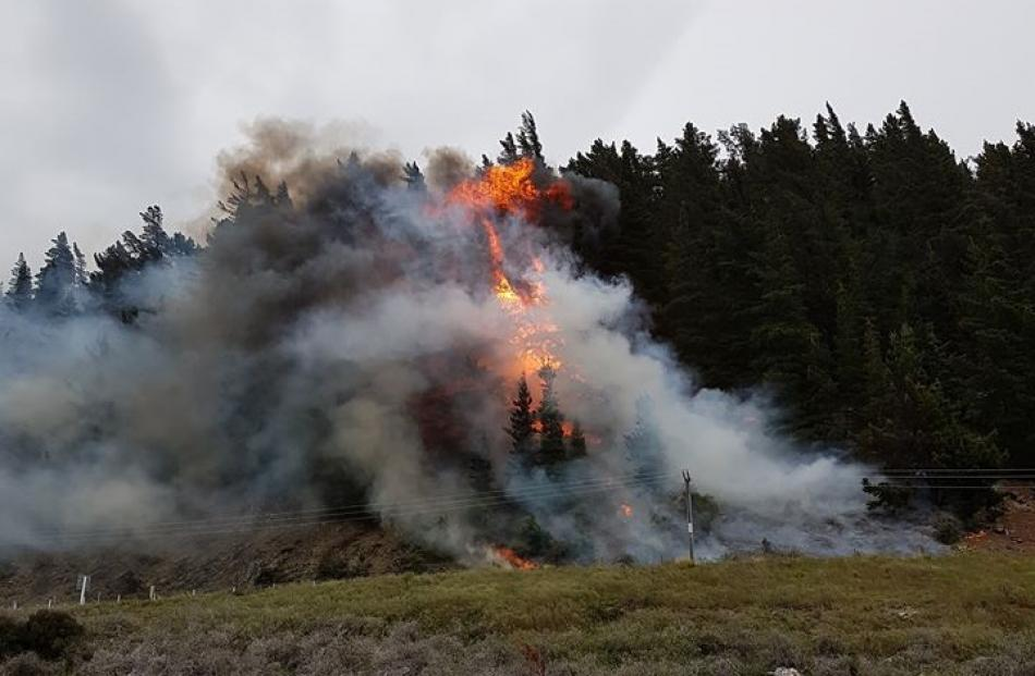 Flames crawl up a tree after a fire broke out in Hawea this evening. Photo: Supplied