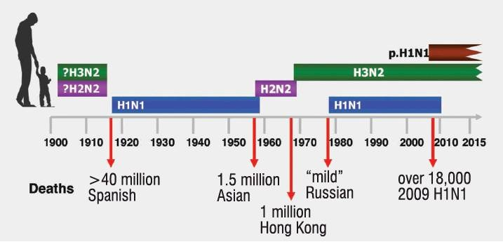 Influenza and pandemics (ie global epidemic) of the past century. Image: supplied