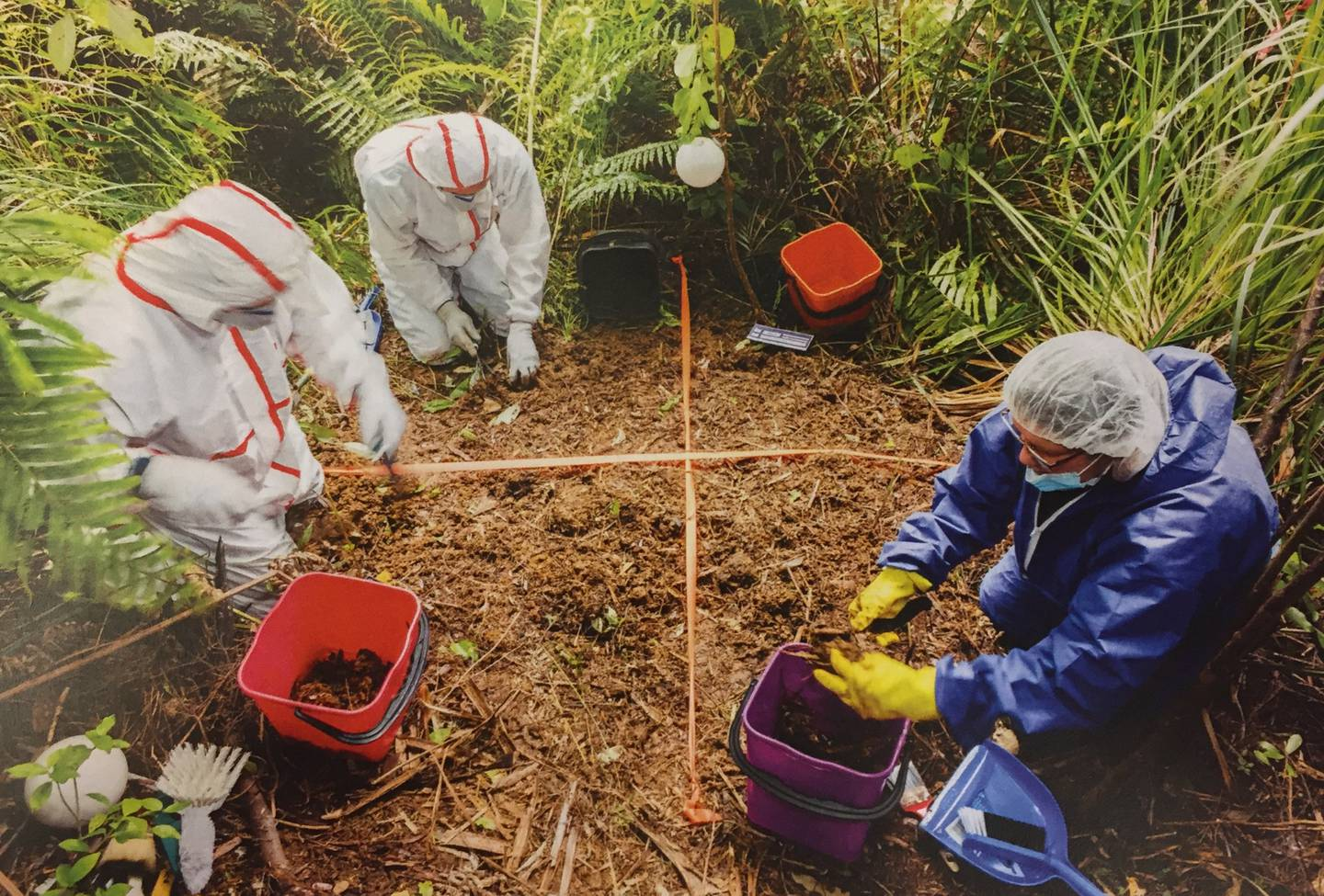 Police forensic experts sift through the site where Grace Millane's body was found in the...
