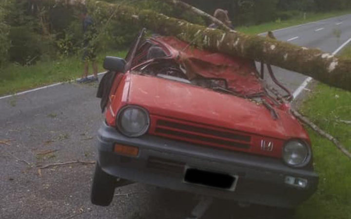 Ryan Walsh survived after a tree fell on his car. Photo: Ryan Walsh via RNZ